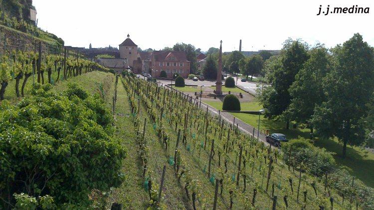 Viñas en Turckheim